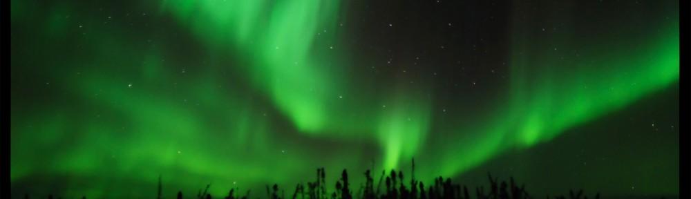 aurora-treeline
