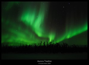 aurora-treeline